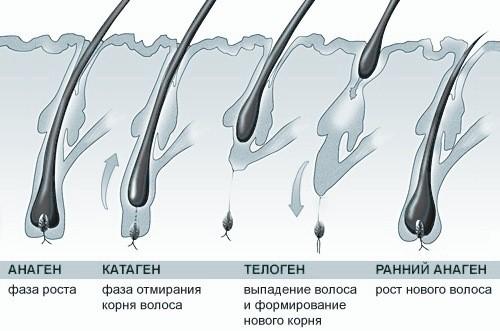 Народные средства при жирных волосах